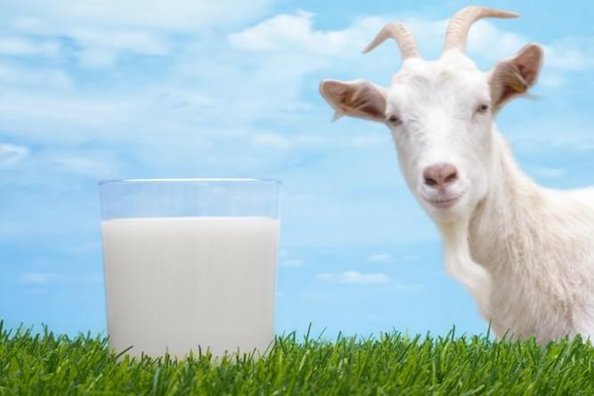 Tắm trắng với thành phần chính từ sữa dê
