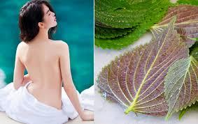 Phương pháp tắm trắng da bằng lá tía tô